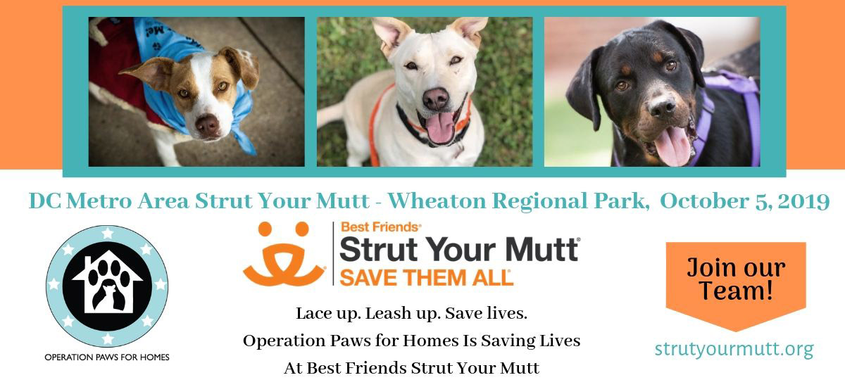 Operation Paws for Homes | All breed dog rescue based in Virgina