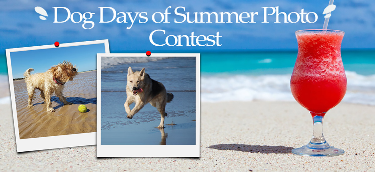 Dog Day of Summer Photo Contest